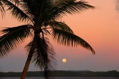 Gesilhouetteerde palm met de maan, Ofu-eiland, Tonga Stock Afbeeldingen