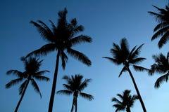 Gesilhouetteerde palmen Stock Foto's