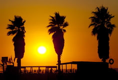 Gesilhouetteerde palmen met zonsondergang Royalty-vrije Stock Foto