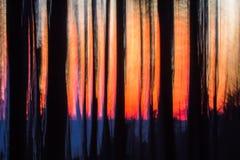 Gesilhouetteerde, vage bomenboomstammen bij zonsondergang dichtbij Ucluelet, het Eiland van Vancouver, BC royalty-vrije stock afbeelding