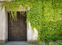 Gesloten deur en groene wijnstokken stock foto's