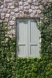 Gesloten houten venster op steenmuur met installaties en groen Stock Afbeelding