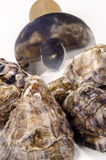 Gesloten oester en een oestermes Royalty-vrije Stock Afbeelding