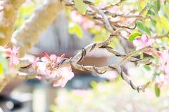 Gesloten omhoog bonsaitak en verpakt door controledraad Royalty-vrije Stock Afbeelding