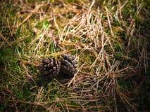 Gesloten omhoog denneappel op een gras en een hooi Stock Foto's