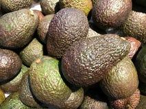 Gesloten omhoog vers Avocadofruit Stock Fotografie