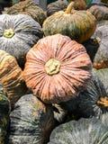 Gesloten omhoog Verse pompoen in de markt Stock Afbeelding