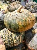Gesloten omhoog Verse pompoen in de markt Stock Fotografie