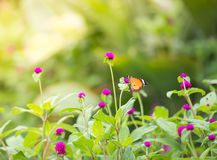 Gesloten omhoog Vlinder op bloem Royalty-vrije Stock Foto's