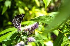 Gesloten omhoog Vlinder op bloem - de achtergrond van de Onduidelijk beeldbloem stock foto