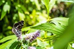 Gesloten omhoog Vlinder op bloem - de achtergrond van de Onduidelijk beeldbloem stock foto's