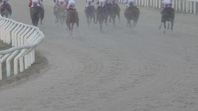 Gesloten schot van paarden in een ras stock video