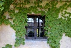 Gesloten venster met klimop Royalty-vrije Stock Fotografie