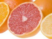 Gesneden citrusvruchten Stock Foto