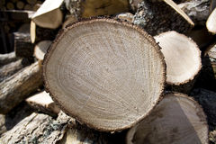 Gesneden eiken brandhout Royalty-vrije Stock Fotografie