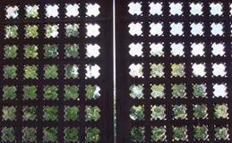 Gesneden houten poorten achtergrond, architectuur Stock Fotografie