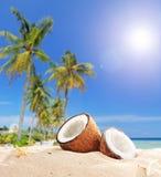 Gesneden kokosnoot op een tropisch strand door de oceaan Stock Foto's
