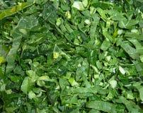 Gesneden verse de lentegreens koolgroente royalty-vrije stock afbeelding