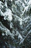 Gesneeuwd bos Stock Foto's