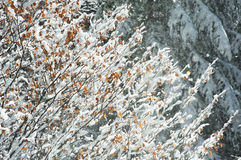 Gesneeuwd bos Royalty-vrije Stock Afbeeldingen