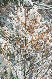 Gesneeuwd bos Stock Afbeeldingen