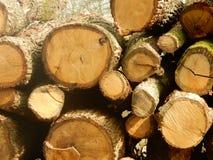Gesnoeide bomen Royalty-vrije Stock Foto's