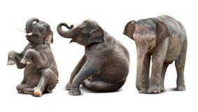 Geïsoleerde babyolifant Stock Foto's