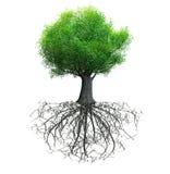 Geïsoleerde boom Stock Foto's
