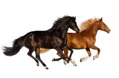 Geïsoleerde¯ paarden Stock Afbeeldingen