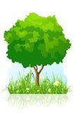 Geïsoleerdeg groene boomachtergrond Stock Foto's