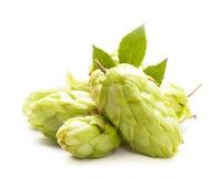 Geïsoleerdeu hop Stock Foto