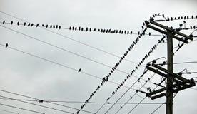 Gesopte Vogels Stock Foto