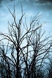 Gespenstische Bäume Stockfoto