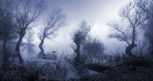 Gespenstische, dunkle und nebelige Landschaft Lizenzfreie Stockfotos