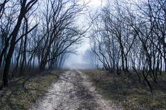 Gespenstische Szene von einem dunklen Wald Stockbilder