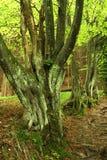 Gespenstischer Baum Stockbild