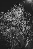 Gespenstischer Baum Stockfotos