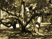 Gespenstischer Baum Stockfoto