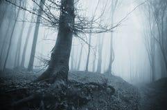 Gespenstischer Baum in einem kalten Wald mit Nebel Lizenzfreies Stockfoto