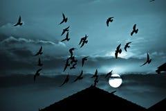 Gespenstischer blauer Sonnenuntergang und Vögel Stockfotos