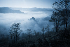 Gespenstischer nebelhafter regnerischer Wald Lizenzfreie Stockfotografie