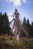 Gespenstischer toter Baum Stockfoto