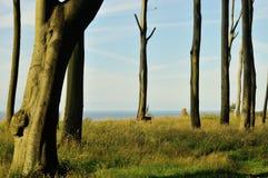 Gespenstischer Wald 2 Lizenzfreies Stockfoto