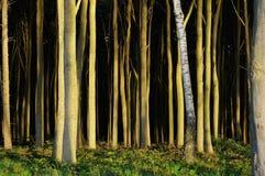 Gespenstischer Wald 3 Stockfoto