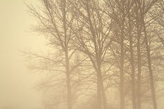 Gespenstischer Wald im Nebel Stockbilder