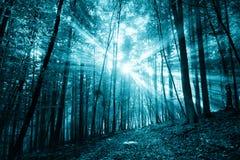 Gespenstisches dunkelblaues farbiges Sonnenlicht in der Waldlandschaft Lizenzfreies Stockfoto
