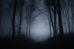 Gespenstisches Holz nachts auf Halloween lizenzfreies stockbild