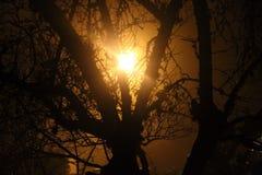 Gespenstisches Licht durch Baum Stockfotos