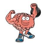 Gespierde hersenen met spieren die gewichten opheffen Stock Afbeeldingen