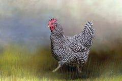 Gespikkeld Hen Walking door Gras royalty-vrije stock foto's